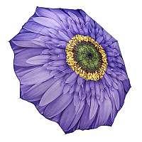 Blooming Brollies Dámsky skladací plne automatický dáždnik Wisteria Daisy GFFWID